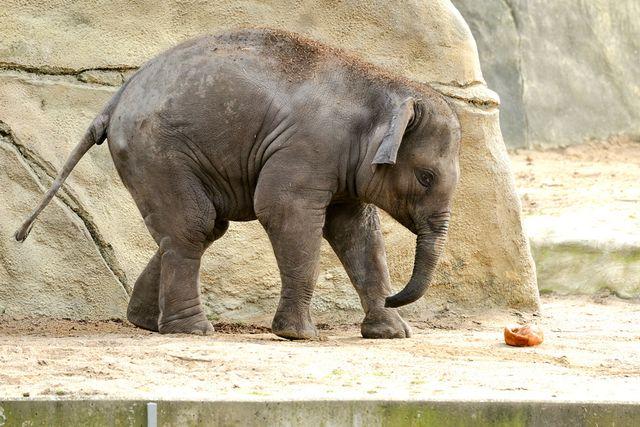 Kölner Zoo Elefantengeburt Freizeitideen Köln 02 - TOP 5 Osterferientipps Köln und NRW