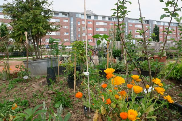 Gemeinschaftsgarten Köln Neuland Urban Gardening für Kinder 10 - Urban Gardening im Kölner Neuland