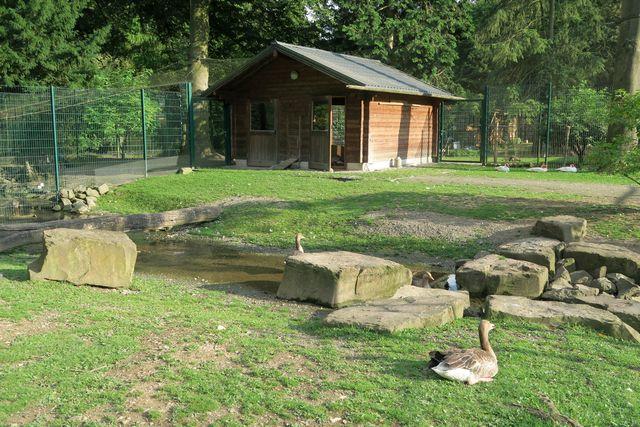 Lindenthaler Tierpark Köln Wildpark Stadtwald 14 - Tiere hautnah erleben im Lindenthaler Tierpark