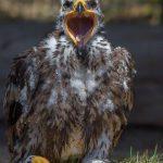 Greifvogelstation Hellenthal für Kinder 150x150 - Ausflugsziele im familiengutscheinbuch köln 2016