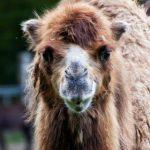 Tierpark Brüggen Charlotta 150x150 - Ausflugsziele im familiengutscheinbuch köln 2016