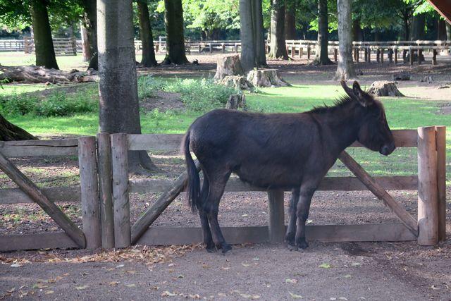 Lindenthaler Tierpark Köln Wildpark Stadtwald 07 - Tiere hautnah erleben im Lindenthaler Tierpark