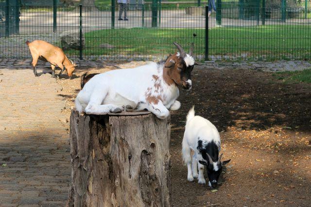 Lindenthaler Tierpark Köln Wildpark Stadtwald 11 - Tiere hautnah erleben im Lindenthaler Tierpark