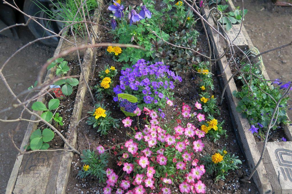 Forstbotanischer Garten 4 1024x683 - Forstbotanischer Garten mit tollem Spielplatz