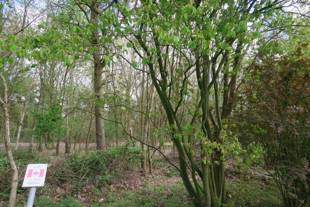 Forstbotanischer Garten 5 1024x683 - Forstbotanischer Garten mit tollem Spielplatz